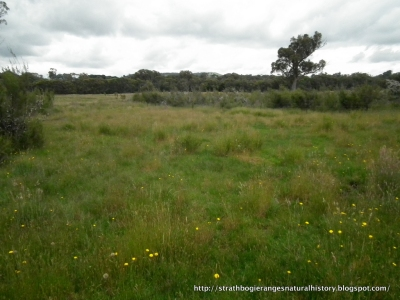 Snipe habitat - Strathbogie Tablelands