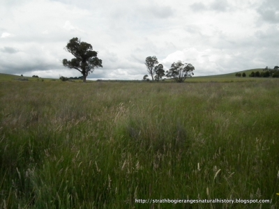 Strathbogie Tableland wetland