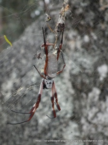 Orb Weaver (Boho South)