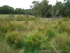 Strathbogie perched bog wetland