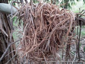 A bundle of shredded bark.