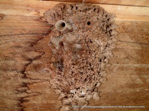 See how to tell if you have a wasp or hornet nest on your property Learn ways to identify and locate the nest and the best treatments available