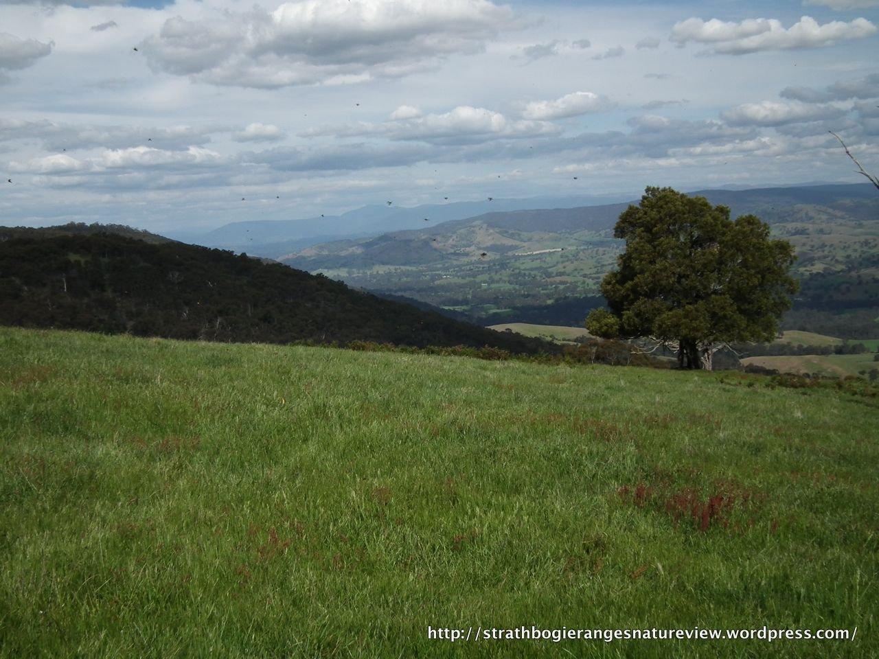 DSCF2272 – Strathbogie Ranges – Nature View