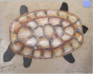 A Bardi Gras Turtle.