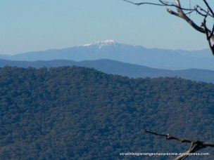 From one peak to another - Mt Buller in the distance.