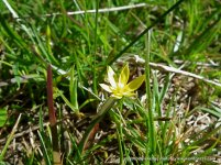 Sundew, Yellow Star and small sedges indicate the soil is waterlogged for part of the year.