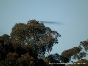 This wisp above the canopy appears to be a water vapour trail - a little cloud.