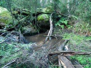 A Sandy Creek waterhole; judging by the hoof-prints, a favorite haunt of deer.