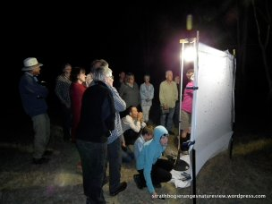 Mothing - this is how it's done.
