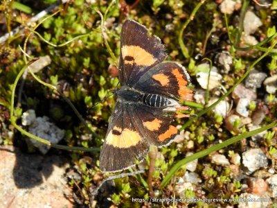 A stunning blend of dark brown and orange.