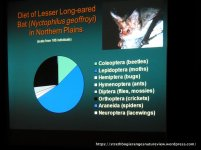 Diet of the Lesser Long-eared Bat.