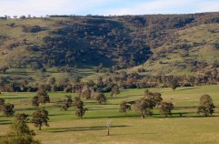 Absence of young Red Gums