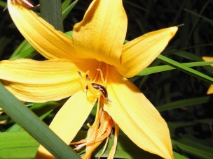 Earwigs were common in lilies and roses