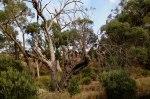 The tree hollows
