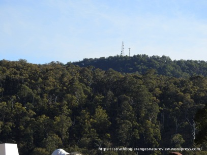 View of Mt Wombat towers from our starting point.