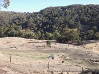 Mt Wombat and Garden Range reserve in background.