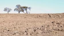 Turned soil glares back the full sun
