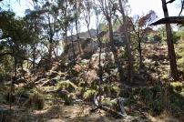 Bracken clad forested glades