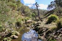 The pretty rocky stream bed