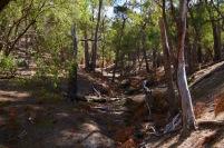 Dehydrated fern gully