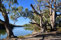The homestead is situated near the Murray River.