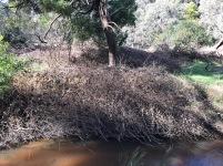 20200720_pho_Nganganu Trail 06
