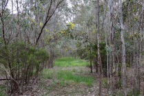 Inside the revegetation it becomes like a maze. Kids will love it.