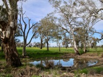 Even the roadside waterholes are picturesque