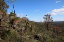 Grass trees surround the summit