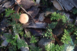 The ground cover varies from season to season, always offering something new. In autumn and winter fungi and green rock fern emerge in abundance.