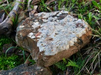 It is an honourable practice, to appreciate a rock. Quartz seams and laminates such as this are an alluring attraction of the National Park.