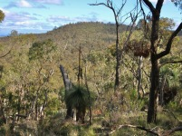 View to Melville's Lookout on Bob's Bluff.