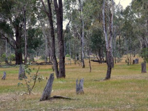 Old stumps tell the story of past land clearing