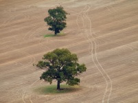 The patterns of the cropping land in autumn make for a geometric contrast to the randomness of the natural surrounds.