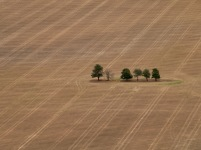 The few remaining trees allowed to remain together in cropping land below.
