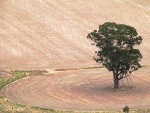 The isolation of the crop land tree. It looks lonely.