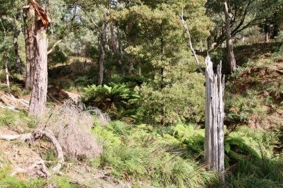 Mt Wombat - 1