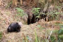 Mt Wombat - 10