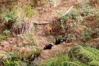 Mt Wombat - 11