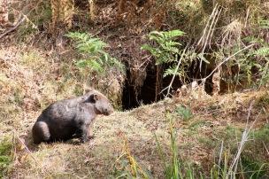 Mt Wombat - 12