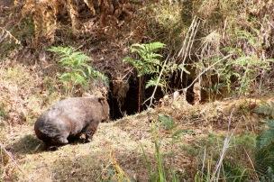 Mt Wombat - 13