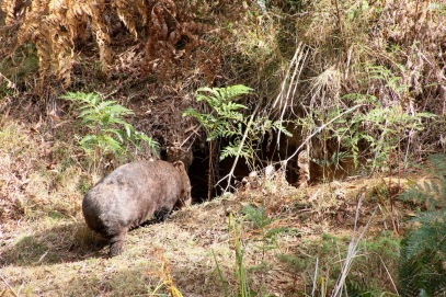 Mt Wombat - 14