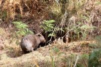 Mt Wombat - 15