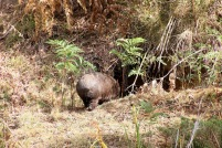 Mt Wombat - 16