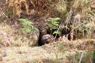 Mt Wombat - 17