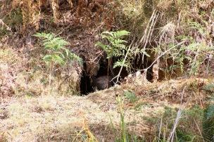 Mt Wombat - 18