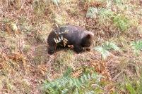 20150411_pho_Mt Wombat 08