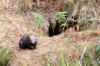 20150411_pho_Mt Wombat 10