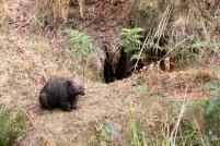 Mt Wombat - 6