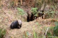 Mt Wombat - 8